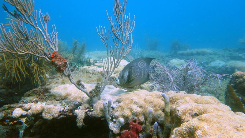 Poissons de récif en plage de Pompano, FL photographie stock libre de droits