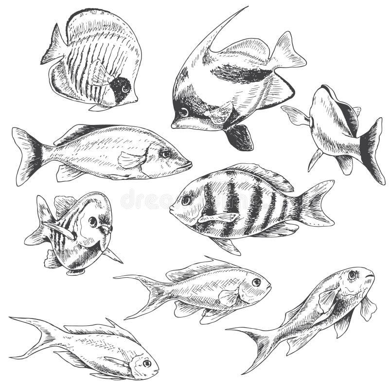 Poissons de récif réglés illustration de vecteur