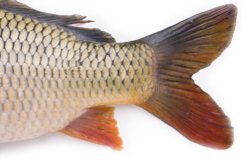 poissons de ramassage images stock
