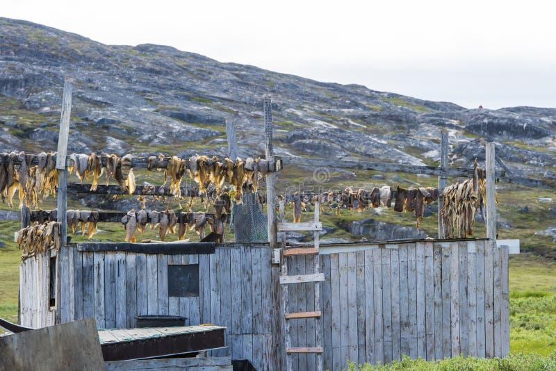 Poissons de séchage au Groenland image stock