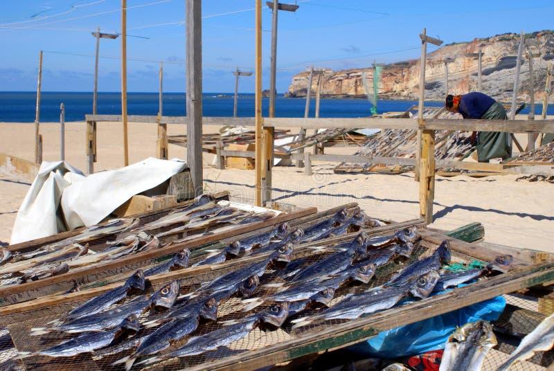 Poissons de s chage de femme en nazare portugal for Nourriture du poisson