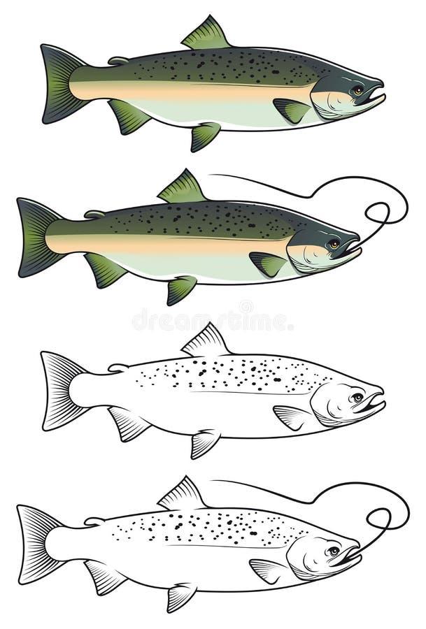 Poissons de saumons de copain illustration stock