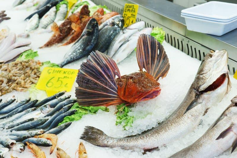 Poissons effrayants frais de fruits de mer sur la glace au compteur de poissonnerie images stock