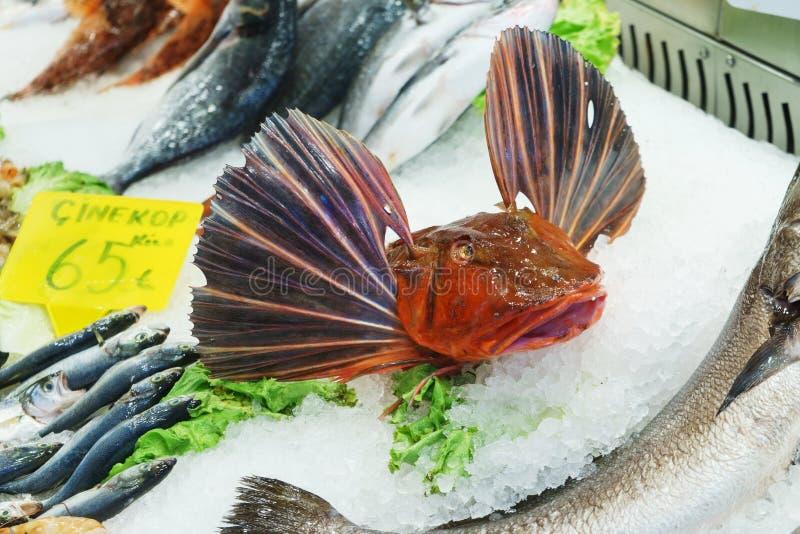 Poissons effrayants frais de fruits de mer sur la glace au compteur de poissonnerie photographie stock