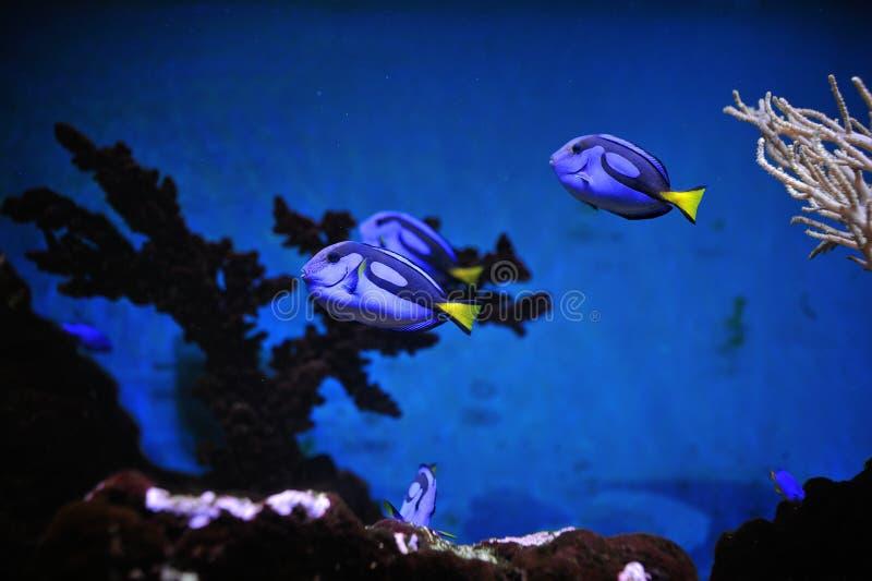 Poissons et aquarium de corral images libres de droits