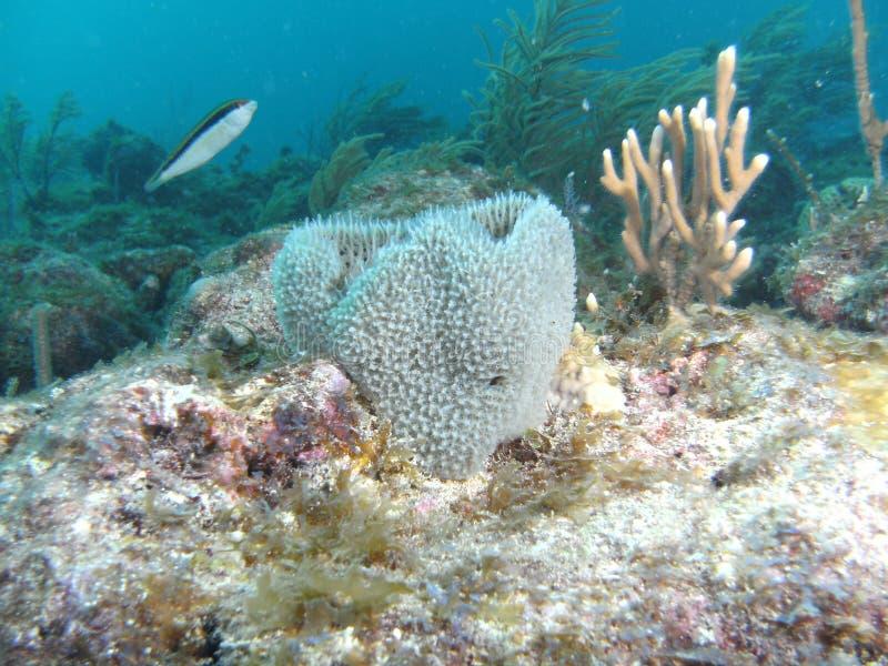 Poissons et corail photos stock