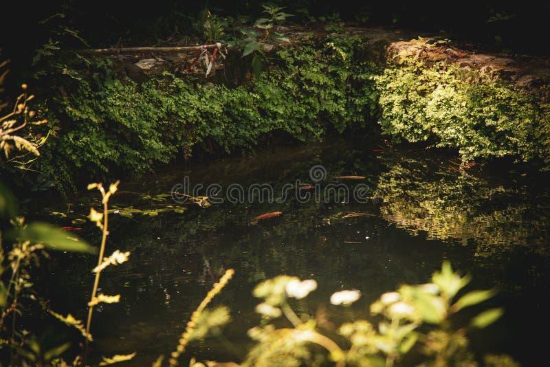 Poissons et eau images libres de droits
