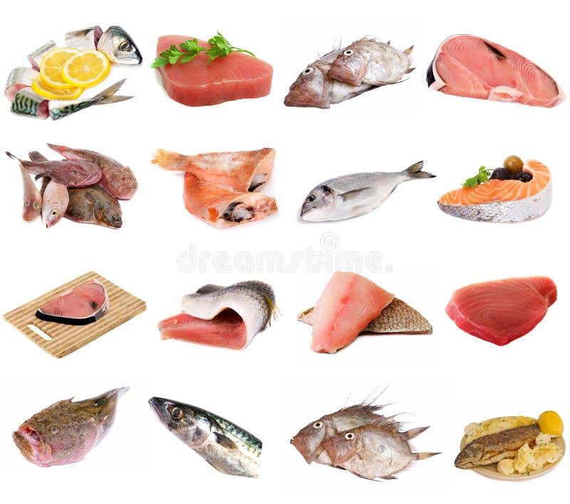 Poissons et filets de poissons image libre de droits