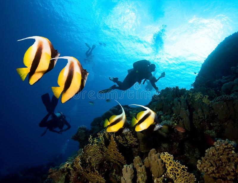 Poissons et plongeurs masqués de papillon photographie stock libre de droits