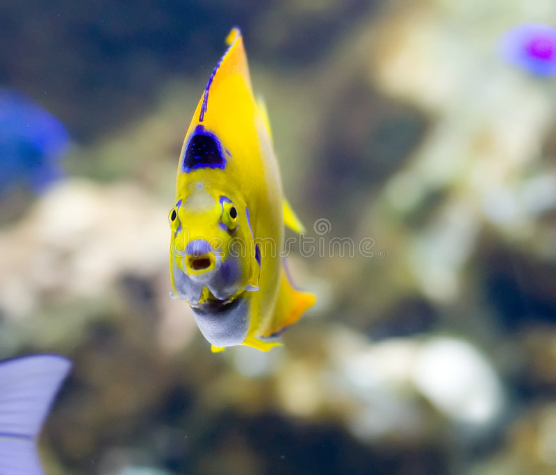 poissons exotiques images stock