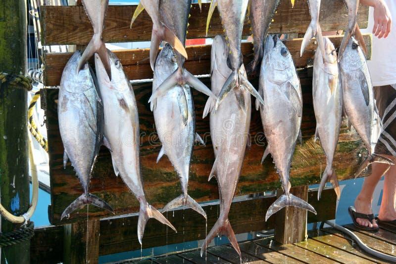 poissons frais photographie stock