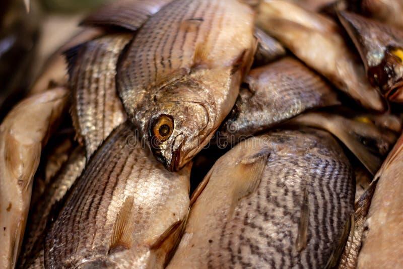 Poissons frais sur le march? Approche des échelles et de la peau des poissons de la mer Protéines de la mer images libres de droits