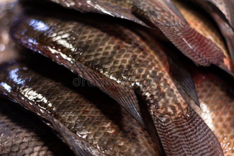 Poissons frais sur le march? Approche des échelles et de la peau des poissons de la mer Protéines de la mer photos stock