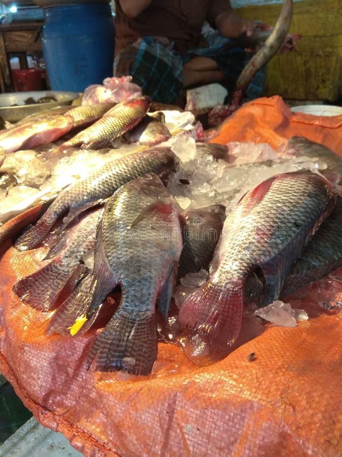 poissons gentils de bazar image stock