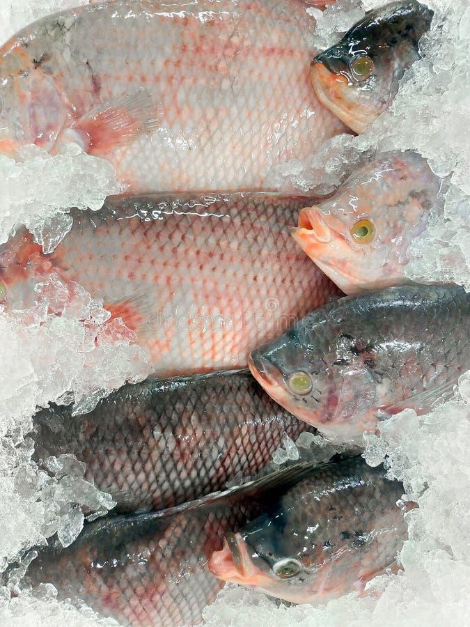 Poissons glacés congelés Pile des poissons de Cichlid de crabe sur l'entreposage au froid Fin vers le haut photo libre de droits