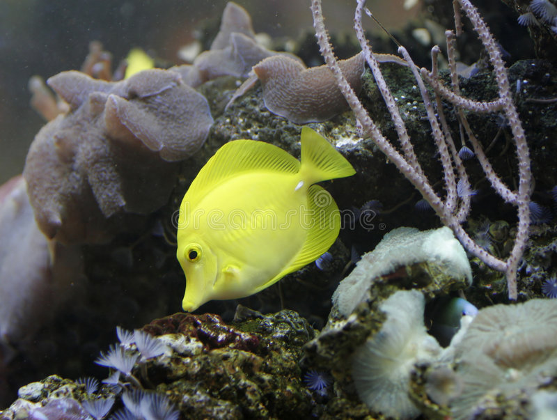 Download Poissons jaunes photo stock. Image du outdoors, ambiant - 740002