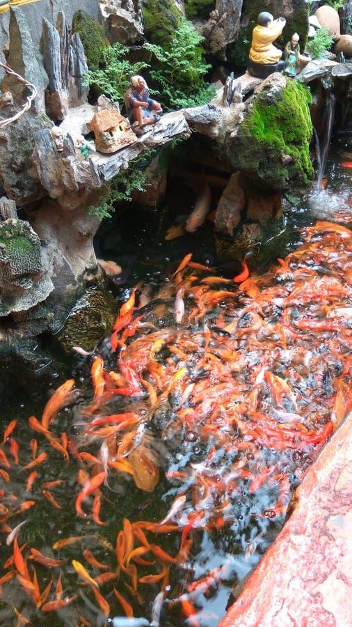 Poissons, koi, pagoda de l'eau de roche photographie stock