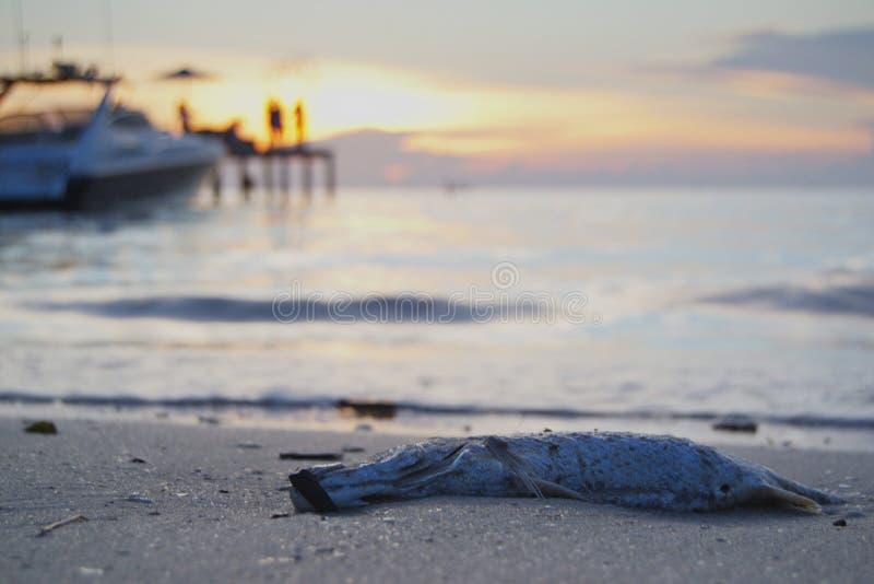 Poissons morts à la plage photos libres de droits