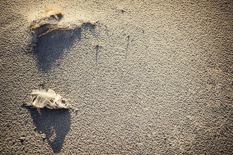 Download Poissons morts photo stock. Image du putréfié, sable - 45363544