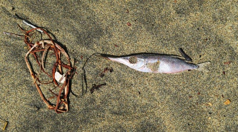 Poissons morts sur le sable à la plage photographie stock