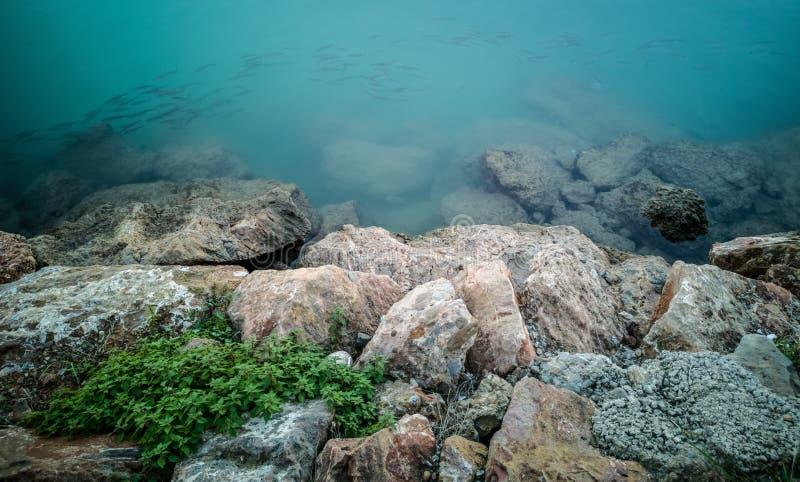 Poissons nageant près des roches image stock