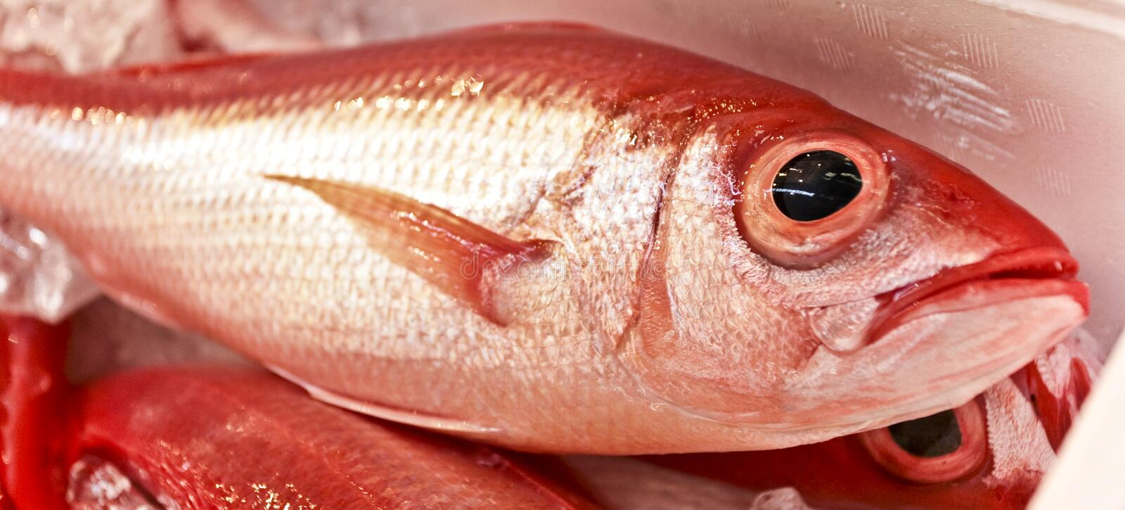 Poissons rouges photos stock