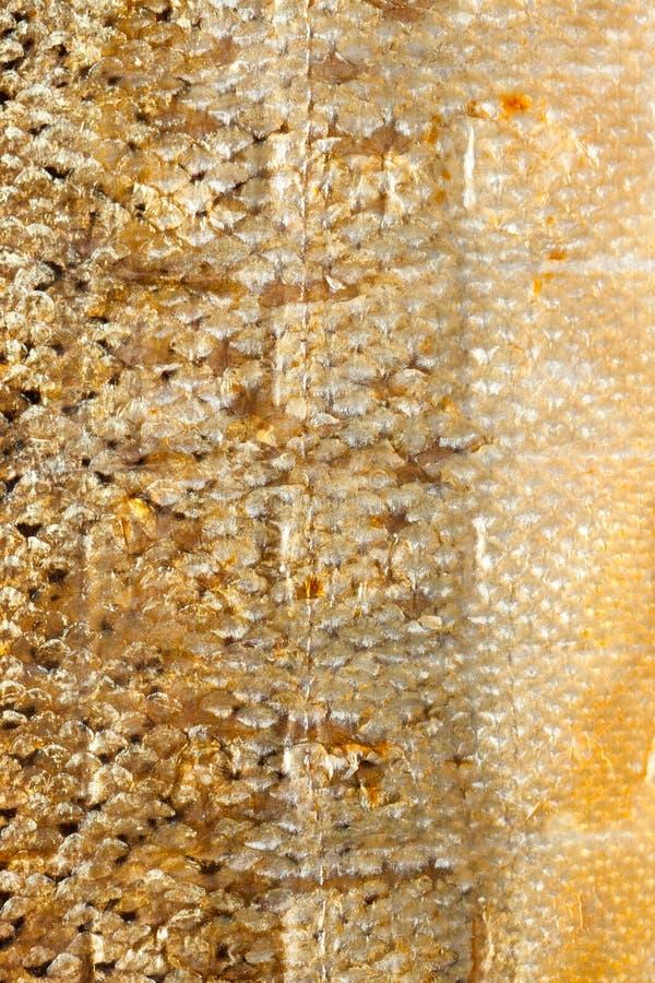 Poissons saumonés d'échelles brillantes de plan rapproché en tant que texture animale de fond de nourriture photos stock