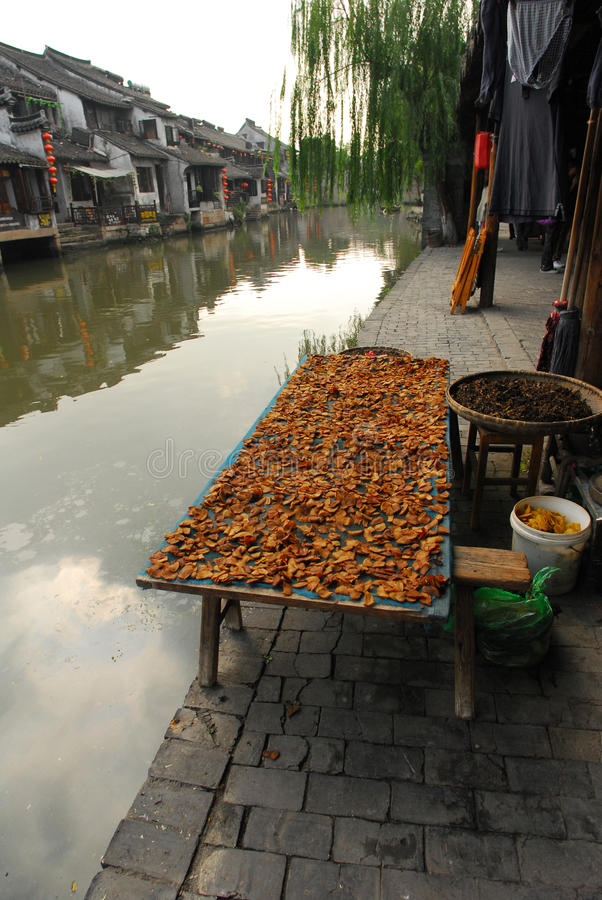 Poissons secs de la Chine photos libres de droits
