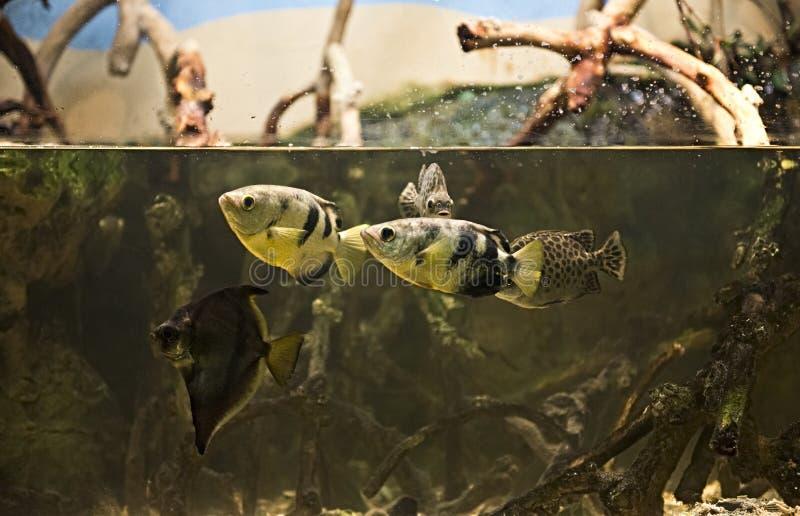 Poissons sous-marins exotiques dans un aquarium de zoo photographie stock libre de droits