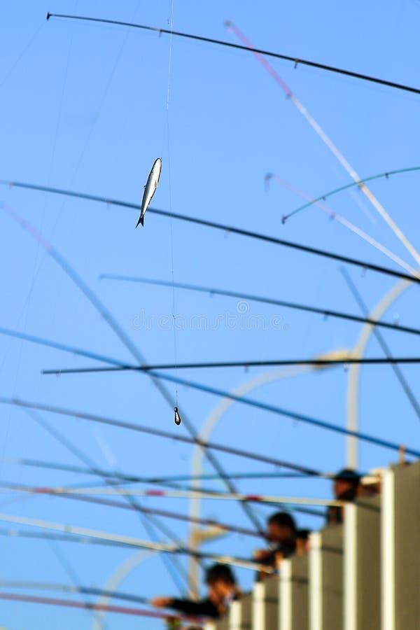 Poissons sur des crochets de pêcheurs images libres de droits