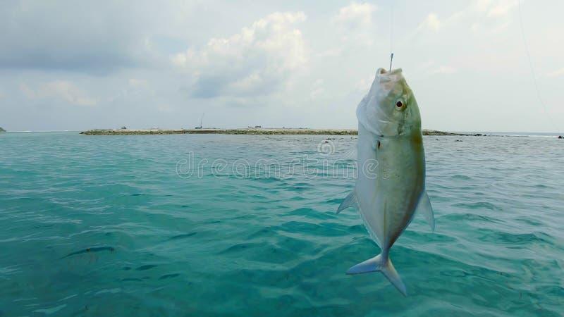 poissons sur un crochet images libres de droits