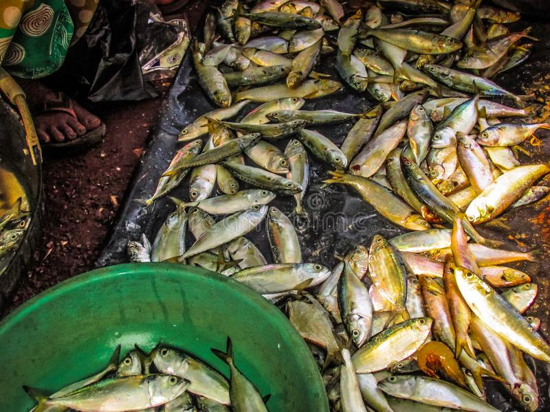 poissons sur un marché photos stock