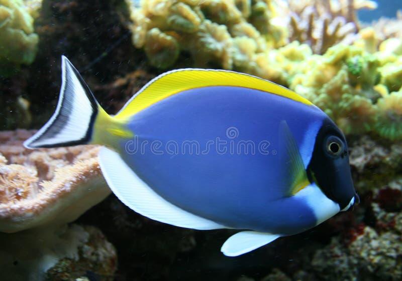 poissons tropicaux photo libre de droits