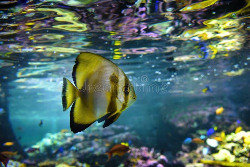 Poissons tropicaux d'aquarium et récif coralien images stock