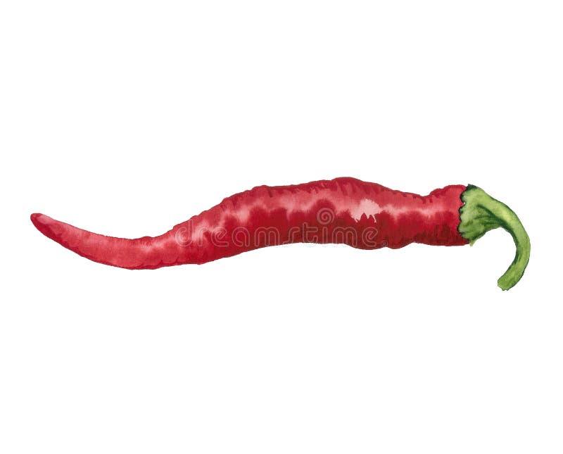 Poivre d'un rouge ardent illustration stock