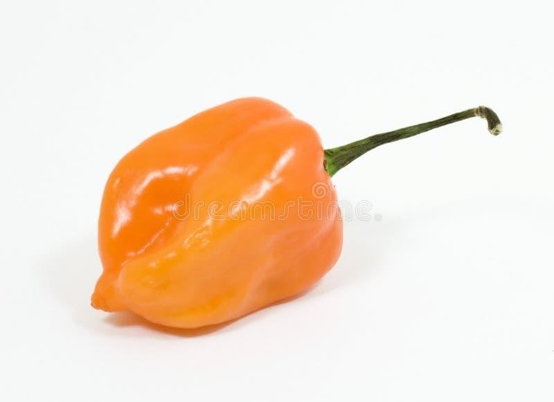 poivre de habanero photographie stock