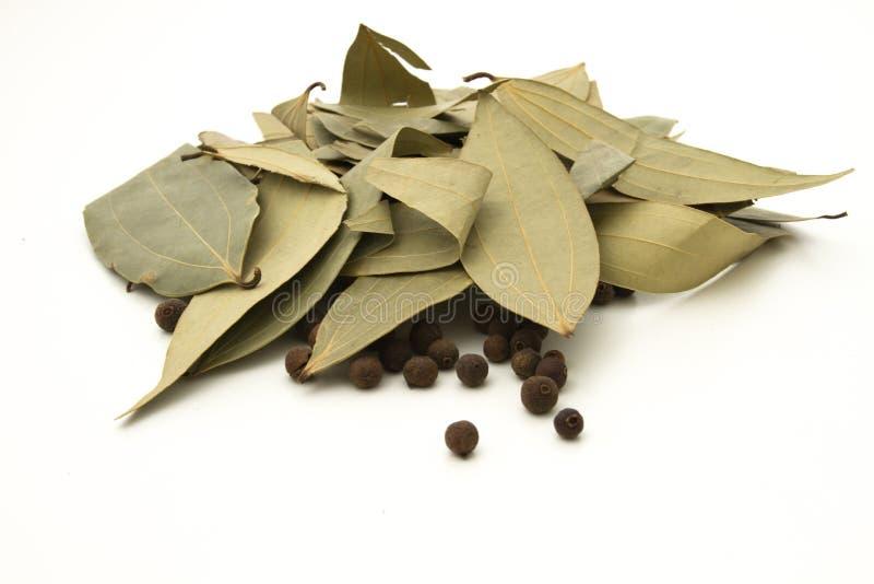 Poivre de Jamaïque et feuilles de laurier image stock