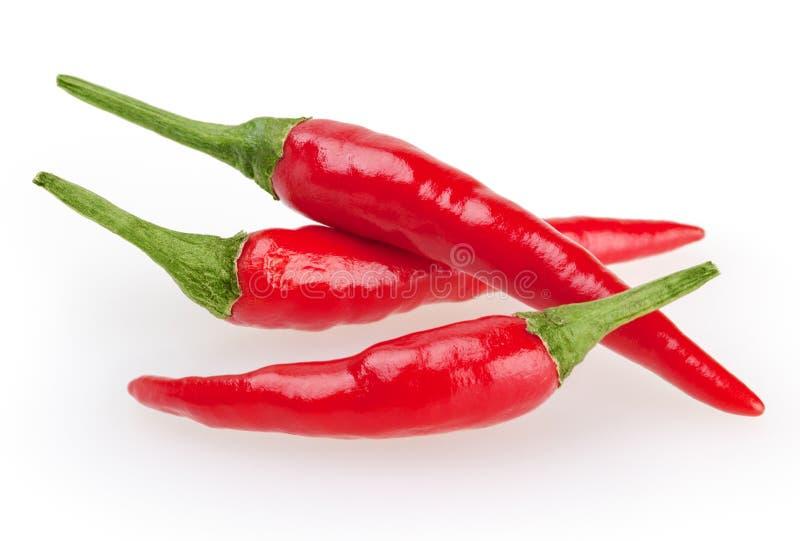 Poivre de piment rouge sur le blanc image stock