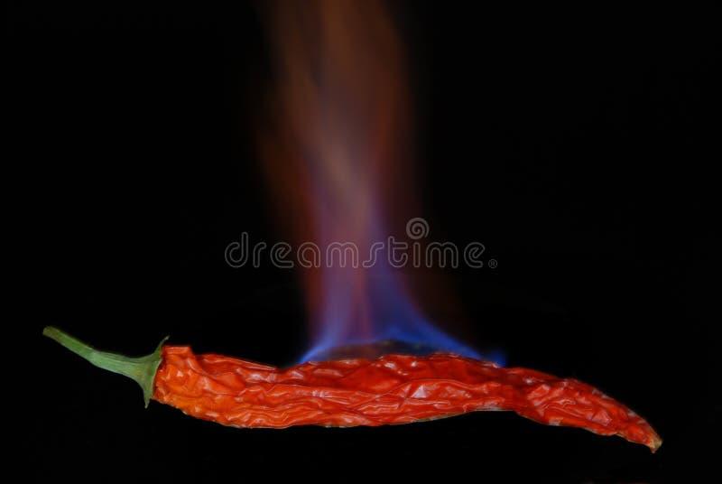 Poivre de /poivron d'un rouge ardent 1 photos libres de droits