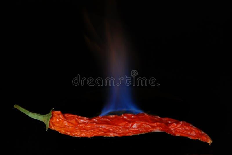 Poivre de /poivron d'un rouge ardent 2 photographie stock
