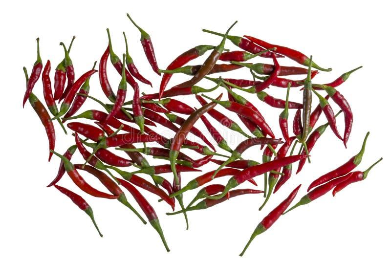 Poivre rouge chaud de poivron photos stock