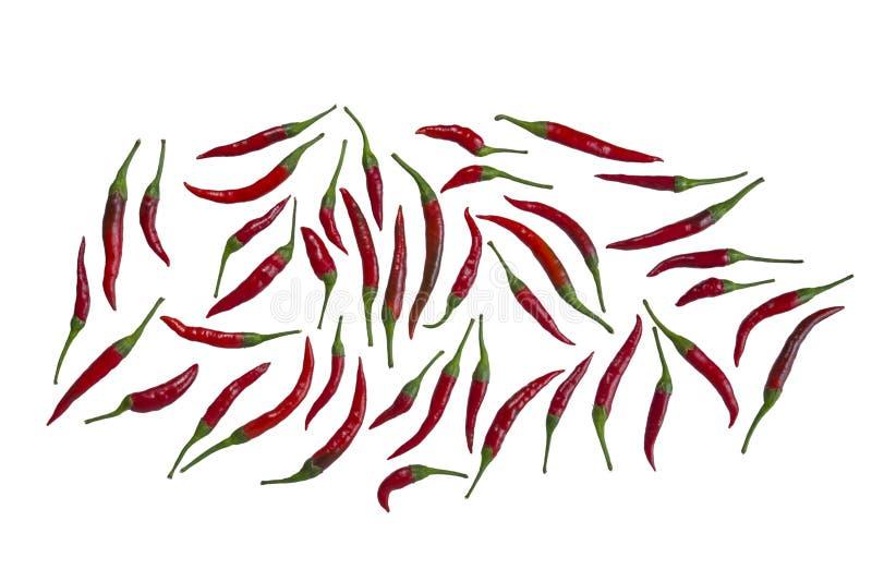 Poivre rouge chaud de poivron photo stock