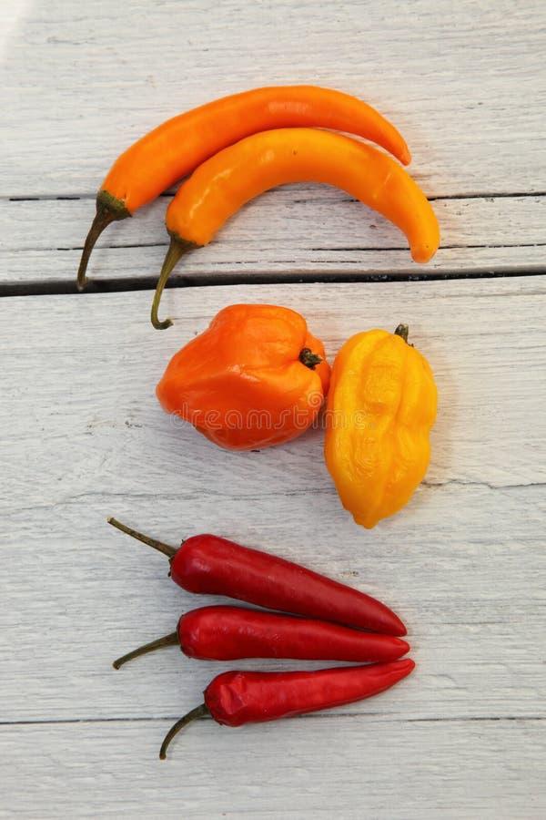 Poivrons colorés de cloche et de piments images stock