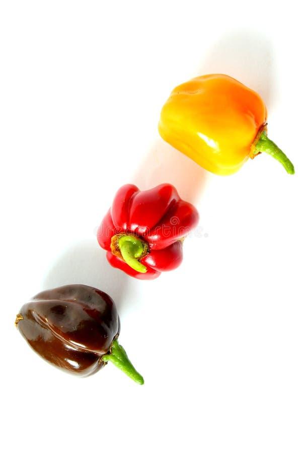 Poivrons de piment color?s frais de habanero d'isolement sur un fond blanc, couleurs nationales de l'Allemagne, noir, rouge, or photographie stock