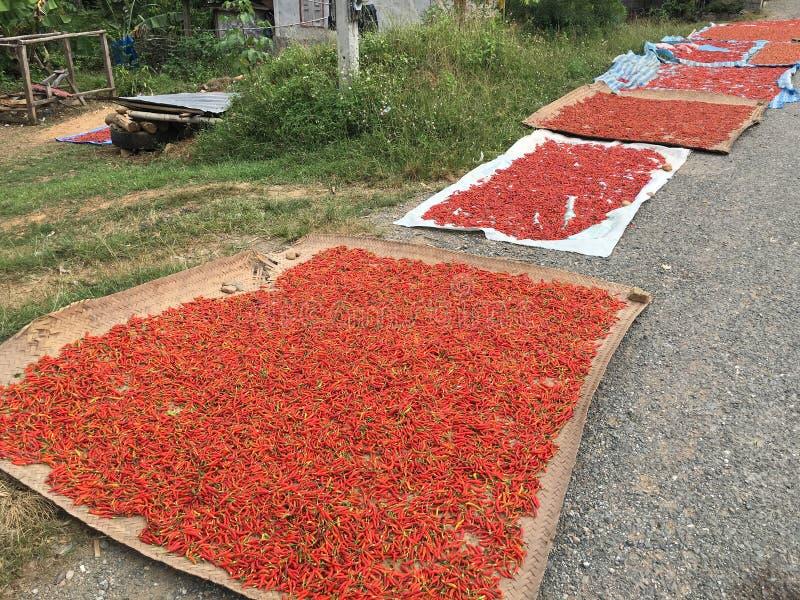 Poivrons de piment obtenant secs par la route photos stock