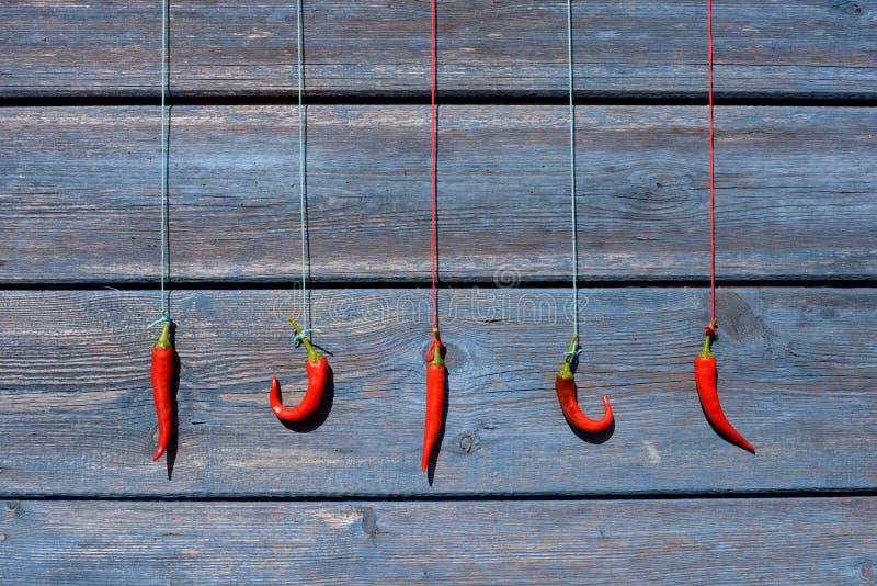 Poivrons de piment rouge accrochant sur une corde sur un mur en bois photo stock