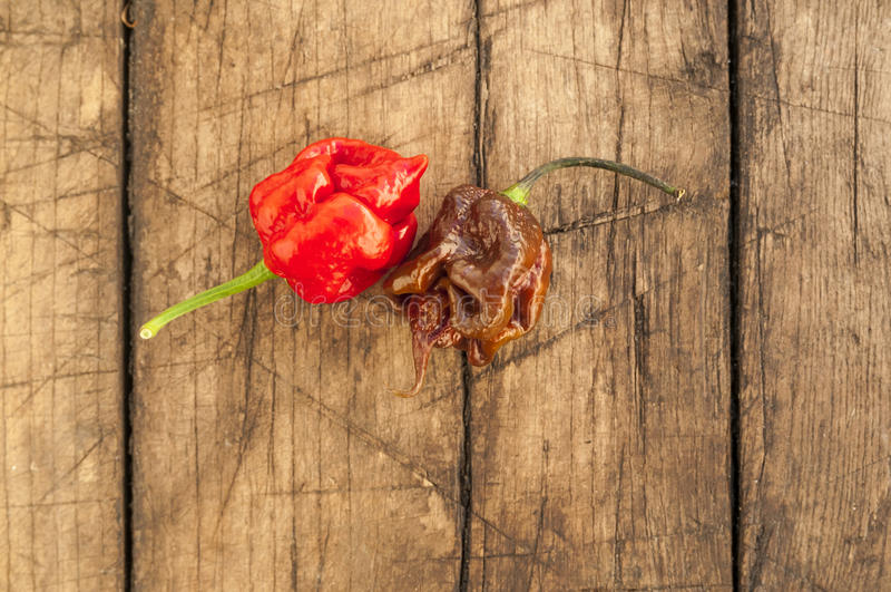 Poivrons de scorpion de moruga du Trinidad, photo stock