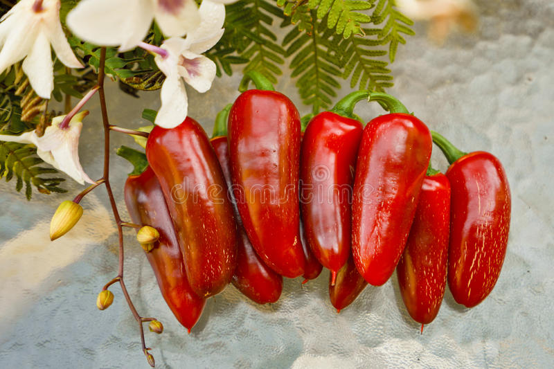 Poivrons rouges chauds images stock