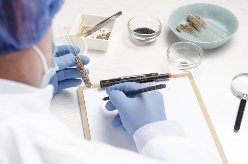 Pojęcie laboraty i testowanie nowi ziarna Mężczyzna jako fachowy laborancki asystent pracuje z różnymi rodzajami ziarna i wri obraz royalty free