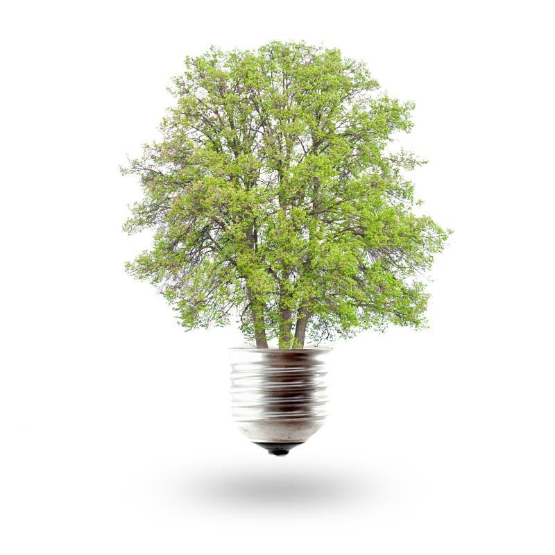 pojęcia energii zieleń obraz royalty free
